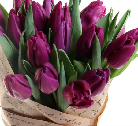 """Фиолетовые тюльпаны """"Спелая ежевика"""" купить по цене 1 866 ... Фиолетовые Тюльпаны"""
