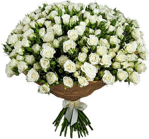 Кустовые розы: уход и выращивание, размножение и обрезка роз, фото ... | 448x480